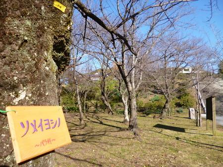 571天神ー光雲神社18.JPG