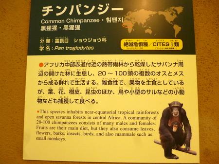623円山動物園10.JPG
