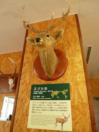 623円山動物園5.JPG