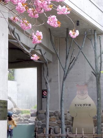 633円山動物園9.JPG