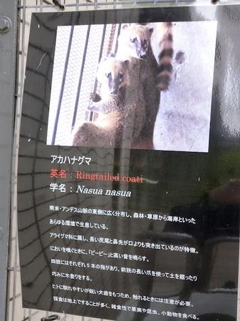658円山動物園3.JPG