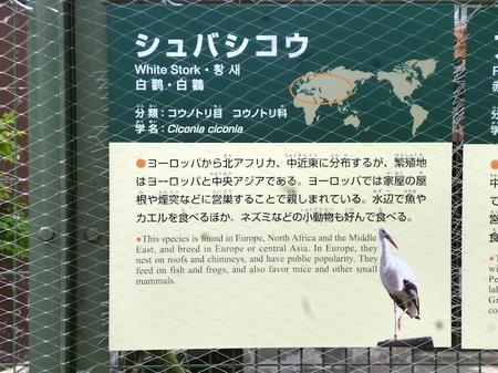 670円山動物園3.JPG