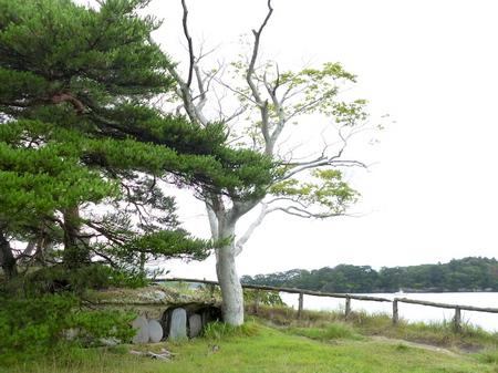 845雄島4ランチ福浦島1.JPG