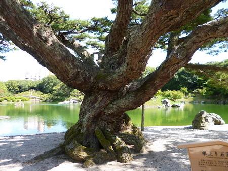 1026栗林公園7.JPG