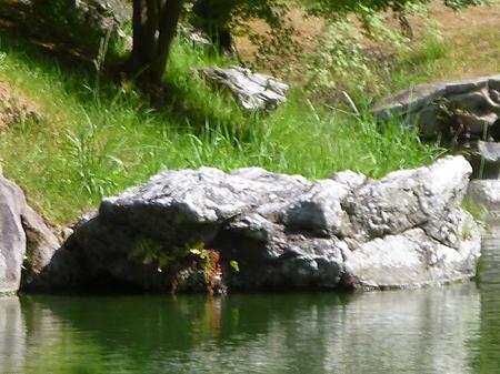 1026栗林公園8.JPG
