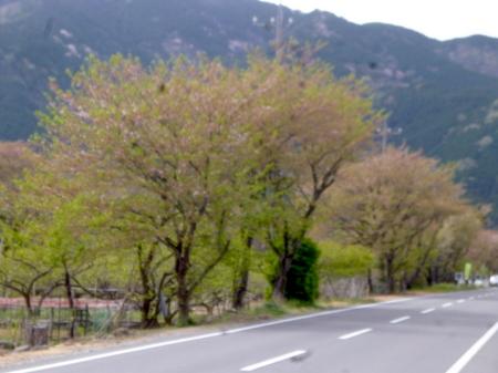 180405墓参り(岐阜)73.JPG