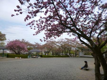180405墓参り(岐阜)75.JPG