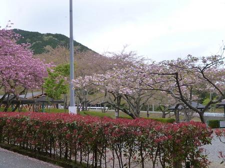 180405墓参り(岐阜)83.JPG