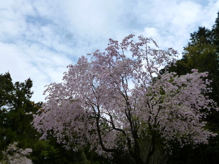 180405墓参り(岐阜)84.JPG