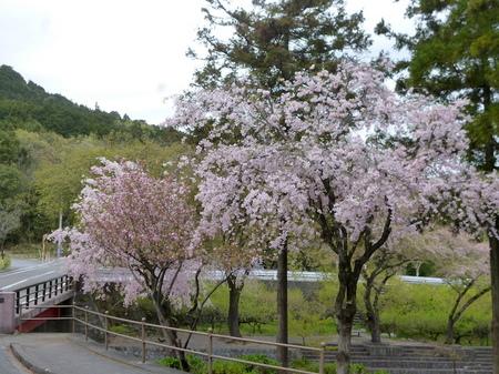 180405墓参り(岐阜)85.JPG