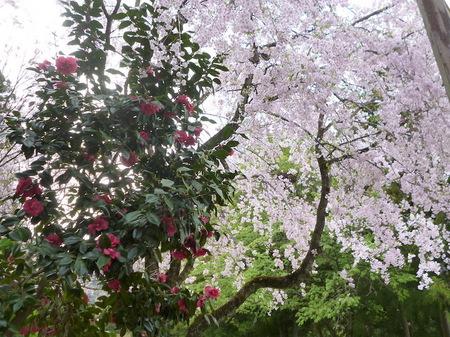 180405墓参り(岐阜)86.JPG