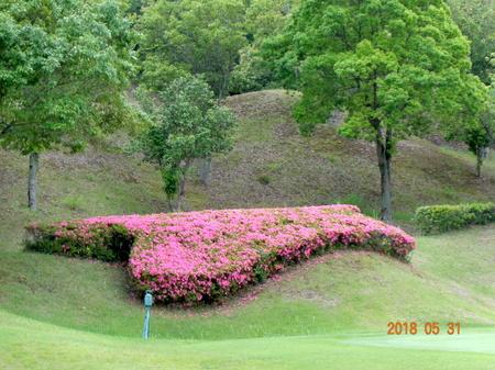 180531ゴルフ16.JPG