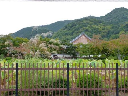 194天龍寺9.JPG