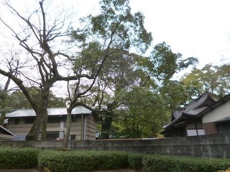 212住吉神社8.JPG