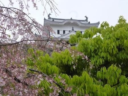 325姫路城3.JPG
