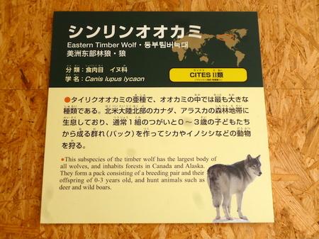 623円山動物園3.JPG