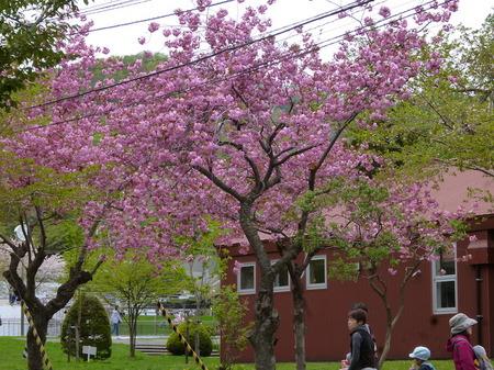 633円山動物園1.JPG