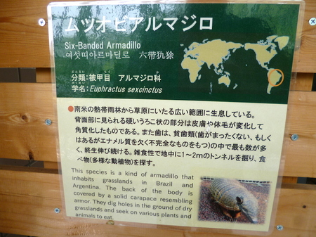 647円山動物園7.JPG