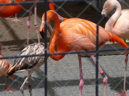 658円山動物園6.JPG