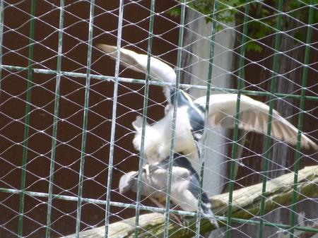 670円山動物園1.JPG