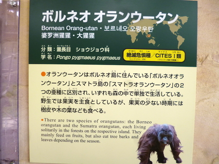 670円山動物園10.JPG