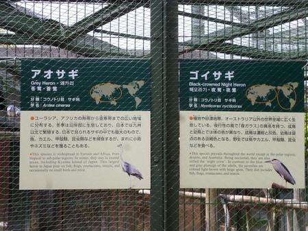 670円山動物園5.JPG