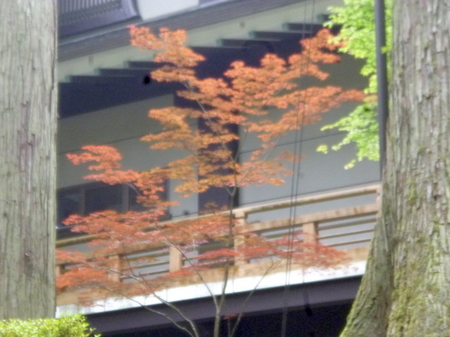 694永平寺12.JPG