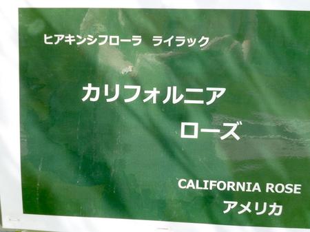 709大通公園2.JPG
