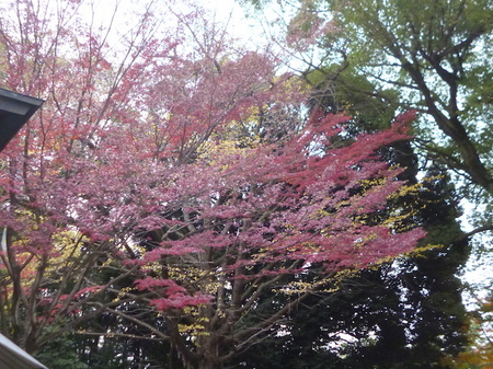 725二荒山神社11.JPG