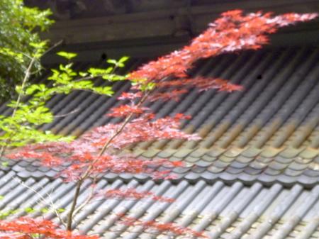 734永平寺10.JPG