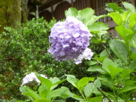 755永平寺11.JPG