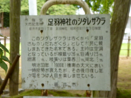 881足羽神社・毛谷黒龍神社7.JPG