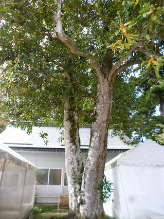 957鹽竈神社2.JPG